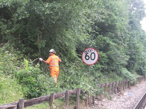Image of Pestblitz worker clearing Japanese Knotweed from the side of a railway track