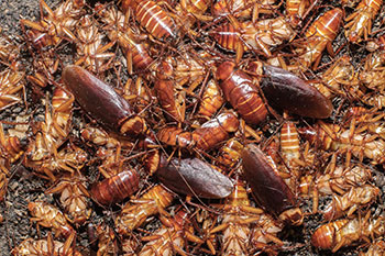 photo of cockroaches